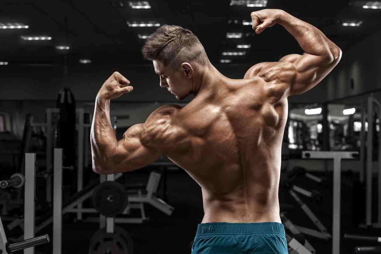 Comment augmenter la masse musculaire naturellement?
