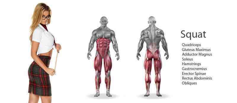 Quel est le groupe musculaire le plus puissant du corps?