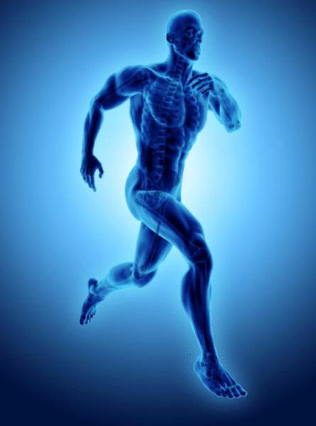 Quels sont les trois principaux groupes musculaires?