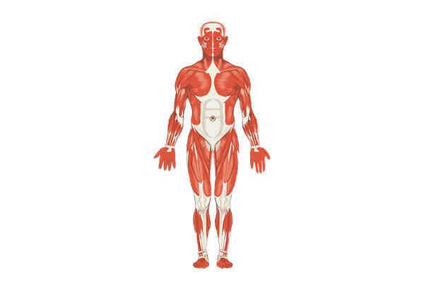 Comment augmenter le volume musculaire?