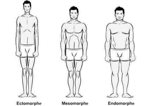 Comment gagner de la masse musculaire rapidement et naturellement?