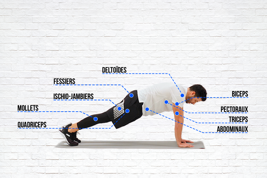 Quels sont les exercices de musculation?