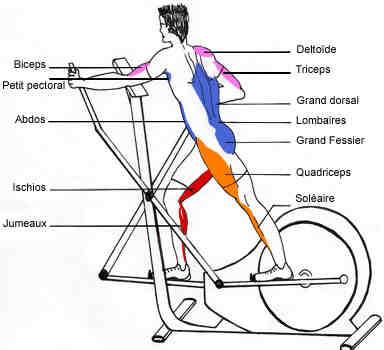 Quels muscles travaillent sur un vélo?
